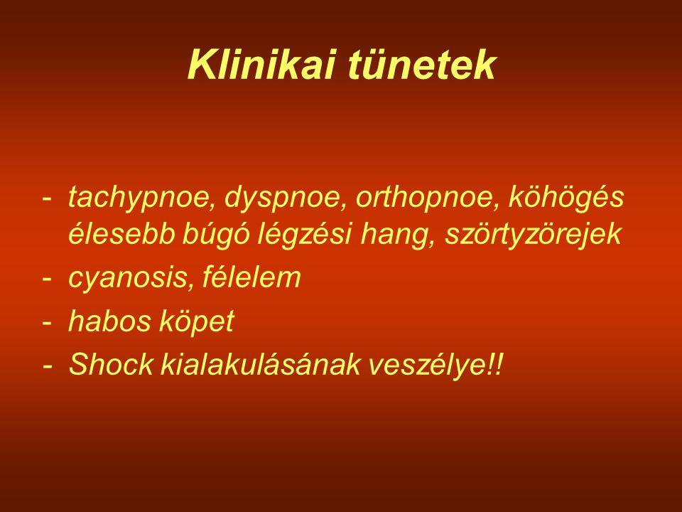 Klinikai tünetek -tachypnoe, dyspnoe, orthopnoe, köhögés élesebb búgó légzési hang, szörtyzörejek -cyanosis, félelem -habos köpet -Shock kialakulásána
