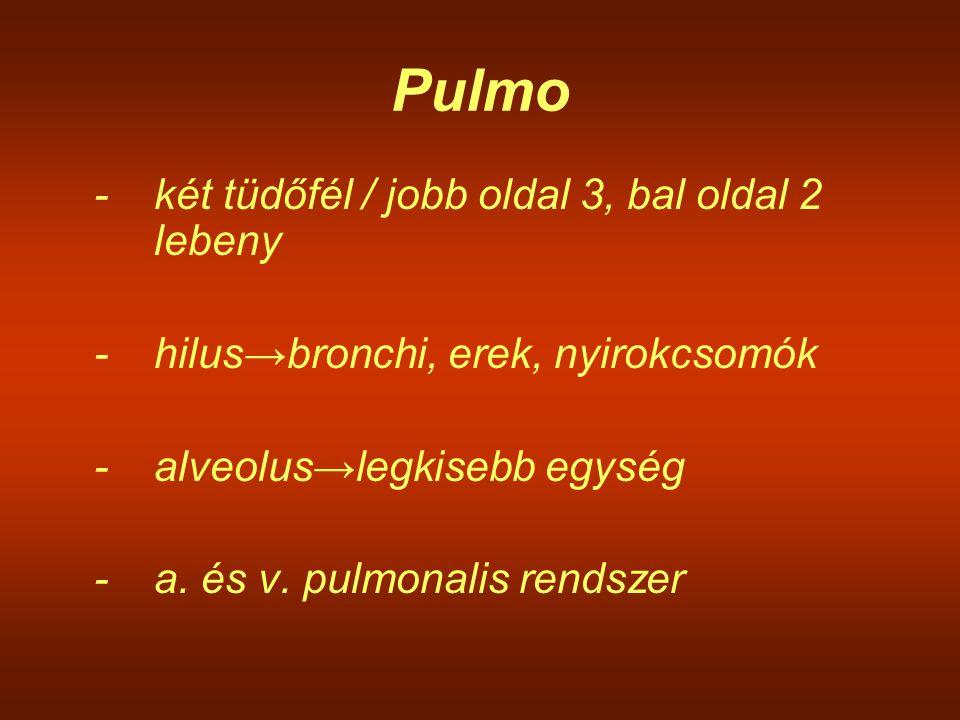 Pulmo -két tüdőfél / jobb oldal 3, bal oldal 2 lebeny -hilus→bronchi, erek, nyirokcsomók -alveolus→legkisebb egység -a. és v. pulmonalis rendszer