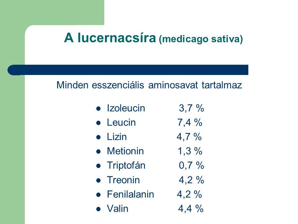 A lucernacsíra (medicago sativa) Minden esszenciális aminosavat tartalmaz Izoleucin 3,7 % Leucin 7,4 % Lizin 4,7 % Metionin 1,3 % Triptofán 0,7 % Treonin 4,2 % Fenilalanin 4,2 % Valin 4,4 %