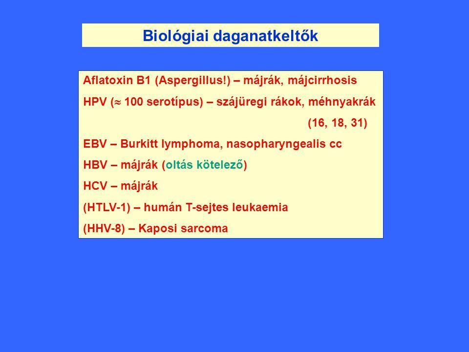 Biológiai daganatkeltők Aflatoxin B1 (Aspergillus!) – májrák, májcirrhosis HPV (  100 serotípus) – szájüregi rákok, méhnyakrák (16, 18, 31) EBV – Bur