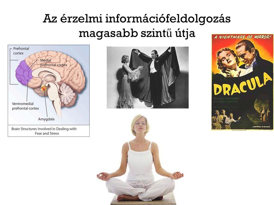 Az érzelmi információfeldolgozás magasabb szint ű útja