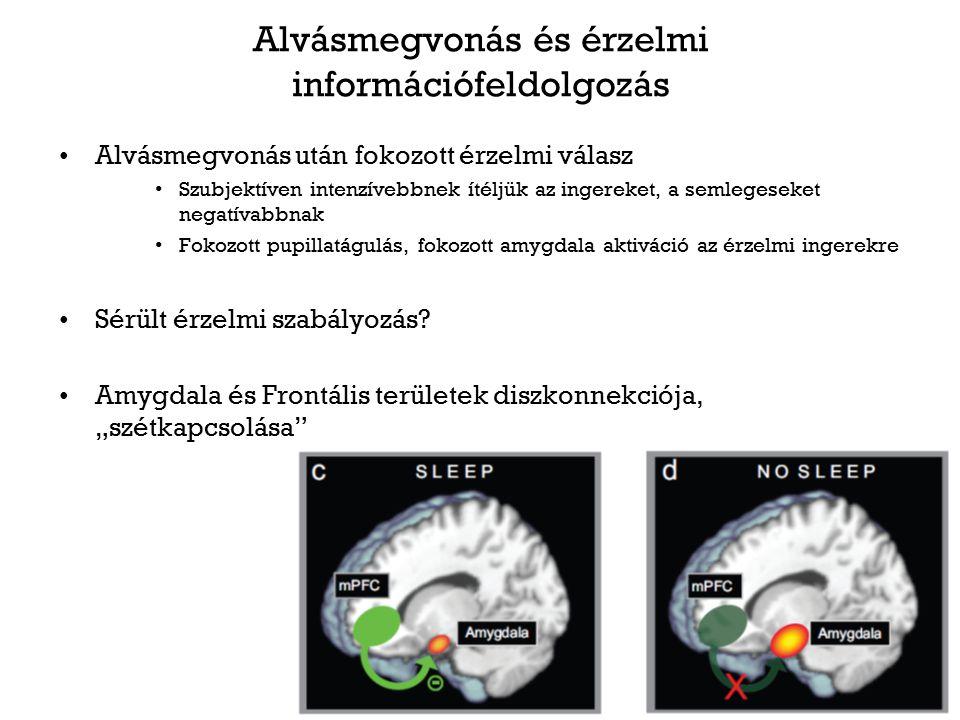 Alvásmegvonás és érzelmi információfeldolgozás Alvásmegvonás után fokozott érzelmi válasz Szubjektíven intenzívebbnek ítéljük az ingereket, a semleges