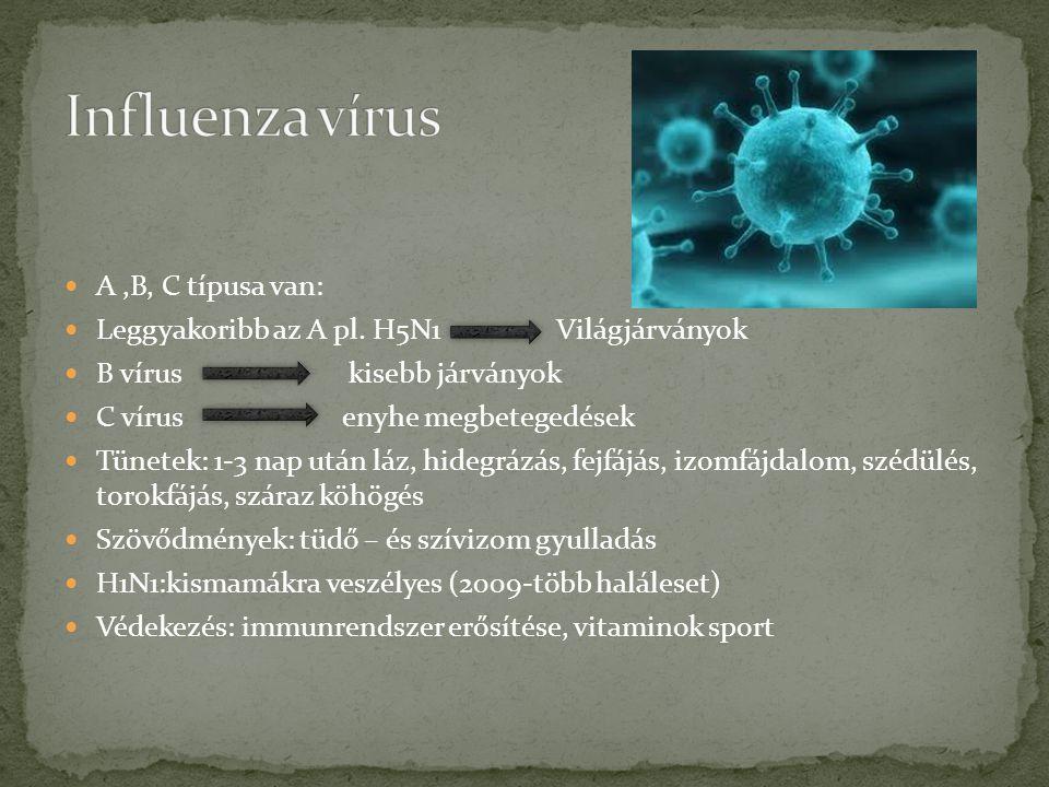 A,B, C típusa van: Leggyakoribb az A pl. H5N1 Világjárványok B vírus kisebb járványok C vírus enyhe megbetegedések Tünetek: 1-3 nap után láz, hidegráz