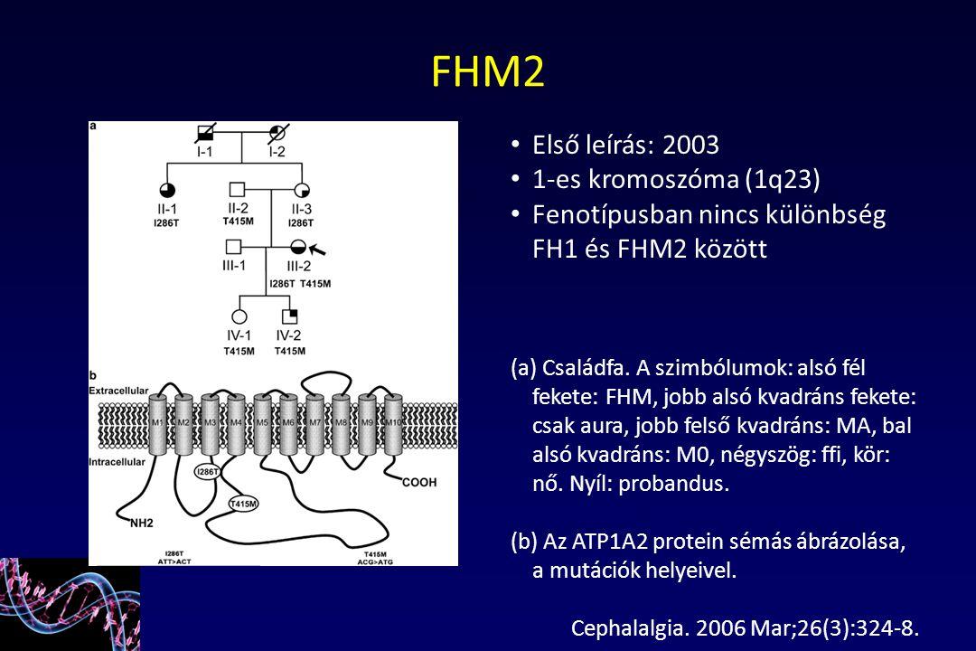 Első leírás: 2003 1-es kromoszóma (1q23) Fenotípusban nincs különbség FH1 és FHM2 között (a) Családfa. A szimbólumok: alsó fél fekete: FHM, jobb alsó