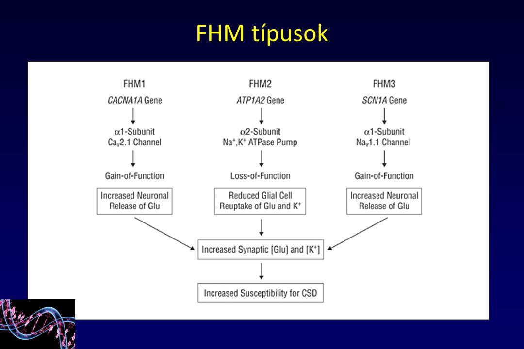 FHM típusok