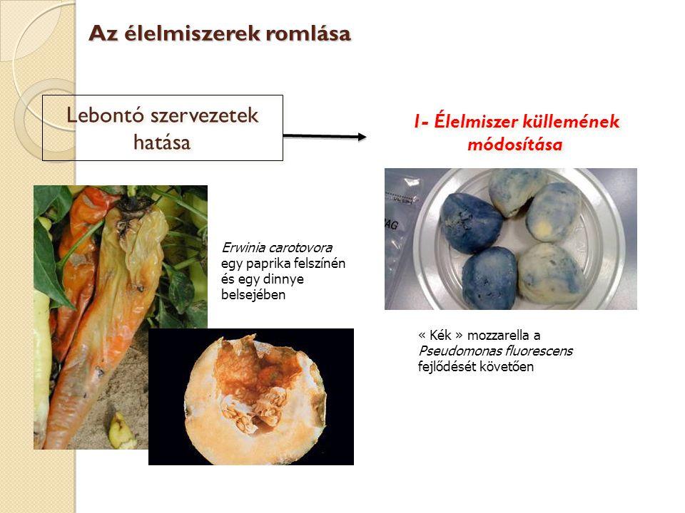Lebontó szervezetek hatása 1- Élelmiszer küllemének módosítása Erwinia carotovora egy paprika felszínén és egy dinnye belsejében « Kék » mozzarella a