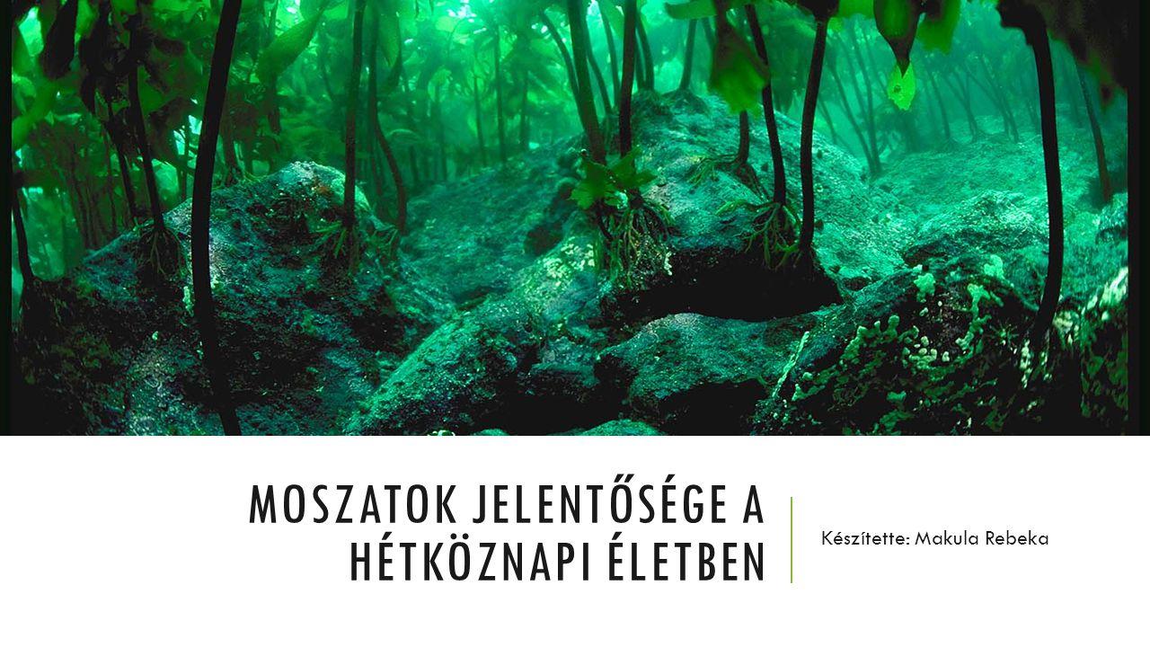 MOSZATOK JELENTŐSÉGE A HÉTKÖZNAPI ÉLETBEN Készítette: Makula Rebeka