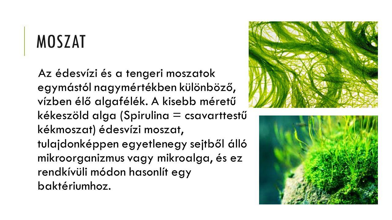 MOSZAT Az édesvízi és a tengeri moszatok egymástól nagymértékben különböző, vízben élő algafélék. A kisebb méretű kékeszöld alga (Spirulina = csavartt