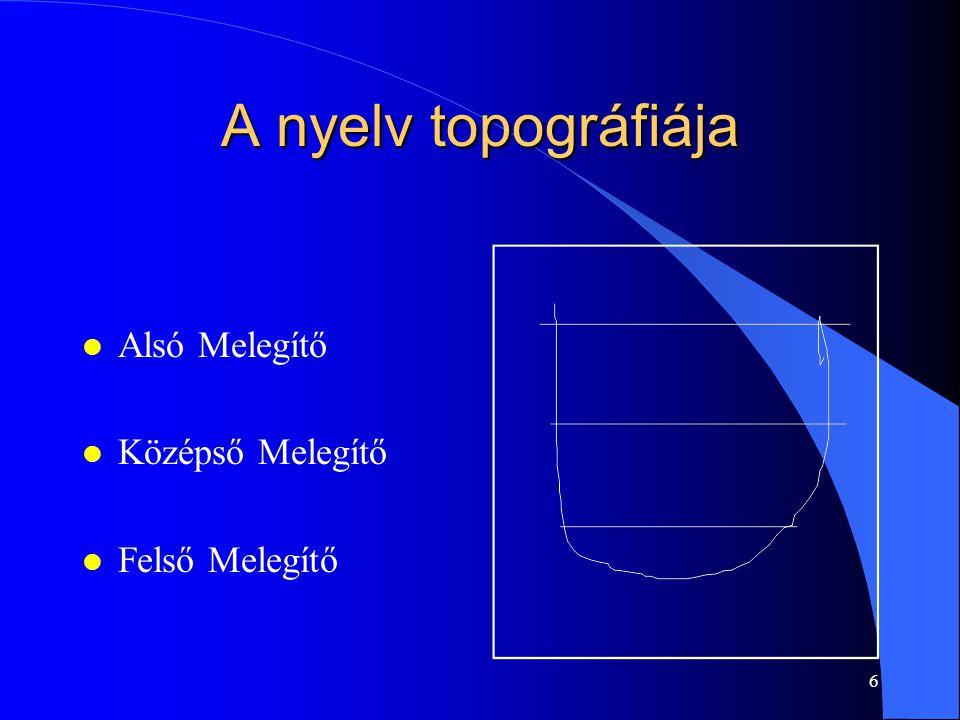 6 A nyelv topográfiája l Alsó Melegítő l Középső Melegítő l Felső Melegítő