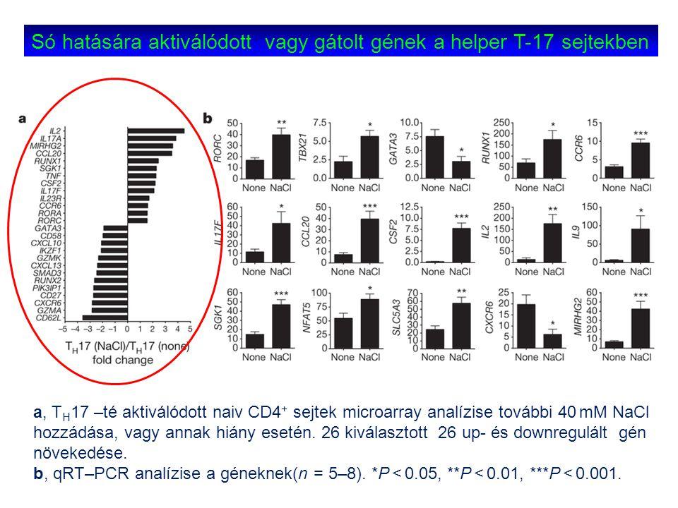 a, T H 17 –té aktiválódott naiv CD4 + sejtek microarray analízise további 40 mM NaCl hozzádása, vagy annak hiány esetén. 26 kiválasztott 26 up- és dow