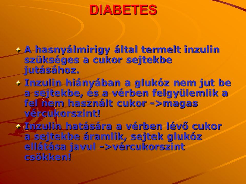 DIABETES A hasnyálmirigy által termelt inzulin szükséges a cukor sejtekbe jutásához. Inzulin hiányában a glukóz nem jut be a sejtekbe, és a vérben fel