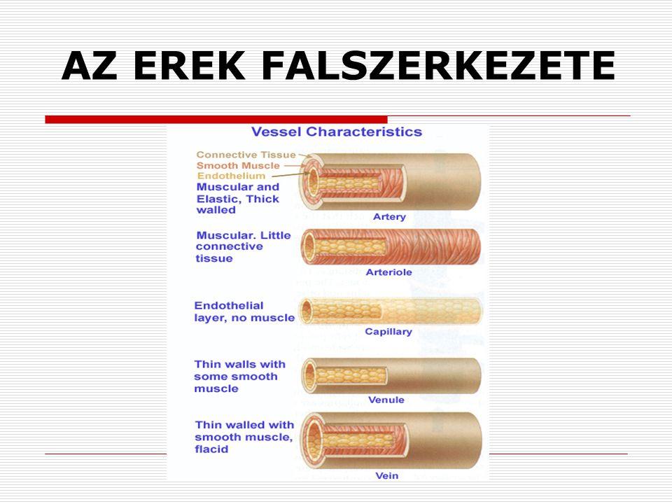 Nyomásváltozások a nagy vérkör artériáiban  Szisztolés nyomás (120 Hgmm)  Diasztolés nyomás (80 Hgmm)  Pulzus nyomás (40 Hgmm)  Középnyomás (93 Hgmm) Vérnyomás mérés Palpatios (tapintásos) módszer Auscultatios (hallgatózásos) módszer Oszcillometriás módszer