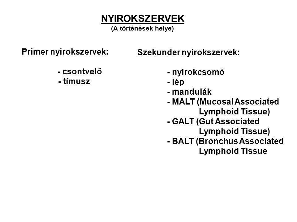 Primer nyirokszervek: - csontvelő - tímusz Szekunder nyirokszervek: - nyirokcsomó - lép - mandulák - MALT (Mucosal Associated Lymphoid Tissue) - GALT (Gut Associated Lymphoid Tissue) - BALT (Bronchus Associated Lymphoid Tissue NYIROKSZERVEK (A történések helye)