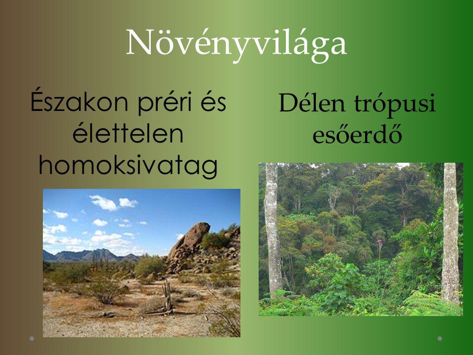 Növényvilága Északon préri és élettelen homoksivatag Délen trópusi esőerdő