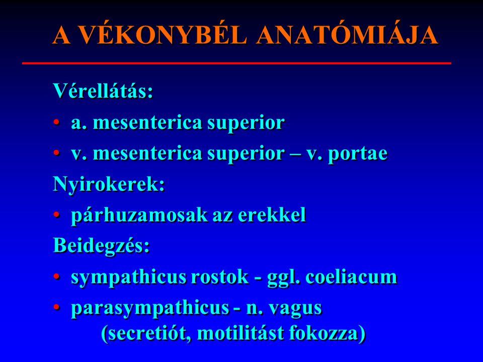 Vérellátás: a. mesenterica superior v. mesenterica superior – v.
