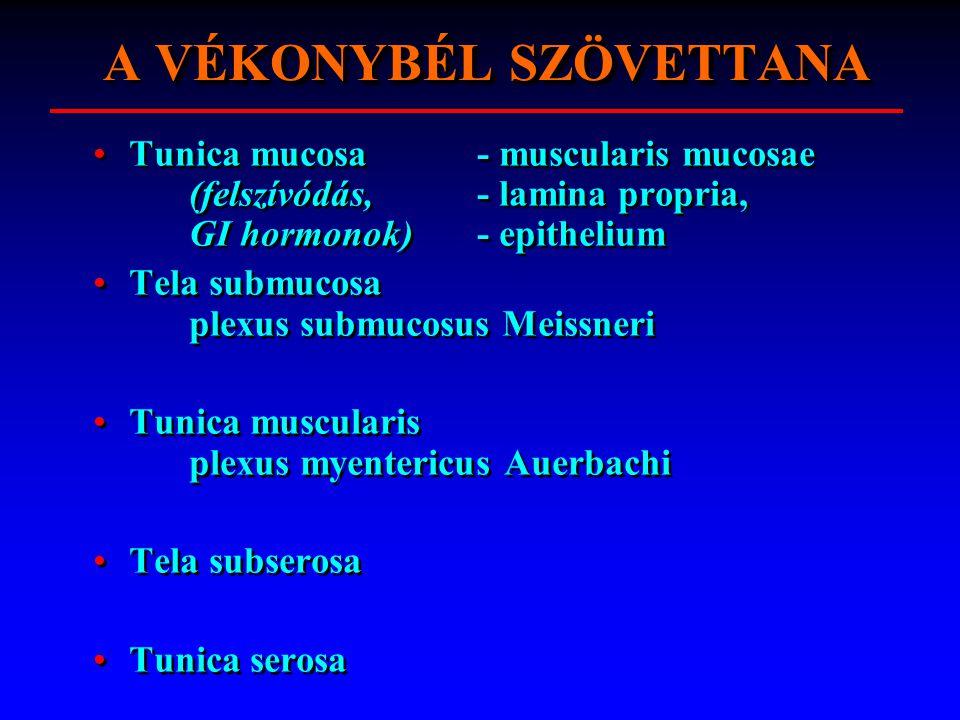 VÉKONYBÉL SZÖVETTANA A VÉKONYBÉL SZÖVETTANA Tunica mucosa - muscularis mucosae (felszívódás, - lamina propria, GI hormonok) - epithelium Tela submucos
