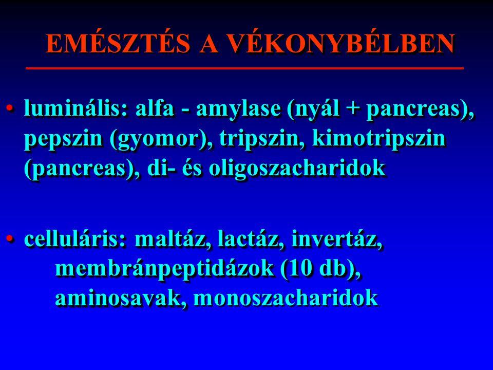 VÉKONYBÉLBEN EMÉSZTÉS A VÉKONYBÉLBEN luminális: alfa - amylase (nyál + pancreas), pepszin (gyomor), tripszin, kimotripszin (pancreas), di- és oligoszacharidokluminális: alfa - amylase (nyál + pancreas), pepszin (gyomor), tripszin, kimotripszin (pancreas), di- és oligoszacharidok celluláris: maltáz, lactáz, invertáz, membránpeptidázok (10 db), aminosavak,celluláris: maltáz, lactáz, invertáz, membránpeptidázok (10 db), aminosavak, monoszacharidok luminális: alfa - amylase (nyál + pancreas), pepszin (gyomor), tripszin, kimotripszin (pancreas), di- és oligoszacharidokluminális: alfa - amylase (nyál + pancreas), pepszin (gyomor), tripszin, kimotripszin (pancreas), di- és oligoszacharidok celluláris: maltáz, lactáz, invertáz, membránpeptidázok (10 db), aminosavak,celluláris: maltáz, lactáz, invertáz, membránpeptidázok (10 db), aminosavak, monoszacharidok