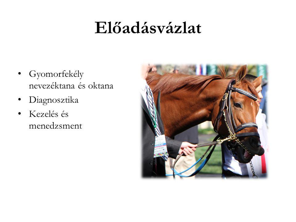 Újszülött csikók Előfordulás Gyakran a nagygörbület mentén Beteg csikók gyomor pH>4 NSAID adagolás Tünetek Anorexia Hasmenés Kólika Fulmináns elhullás (gyomorperforáció)
