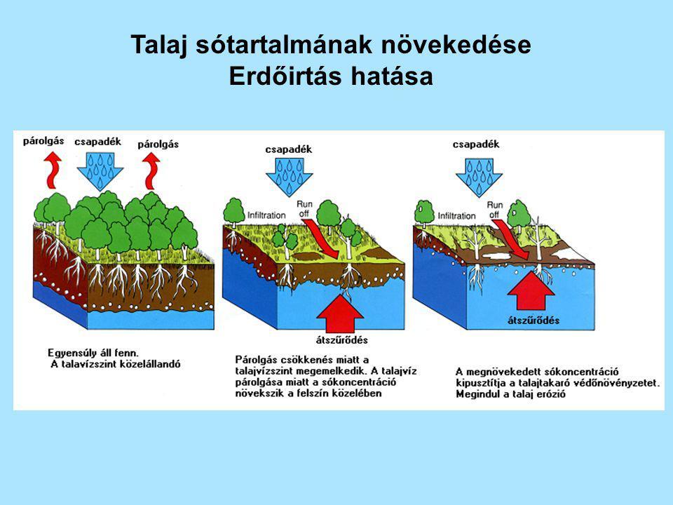 Talaj sótartalmának növekedése Erdőirtás hatása