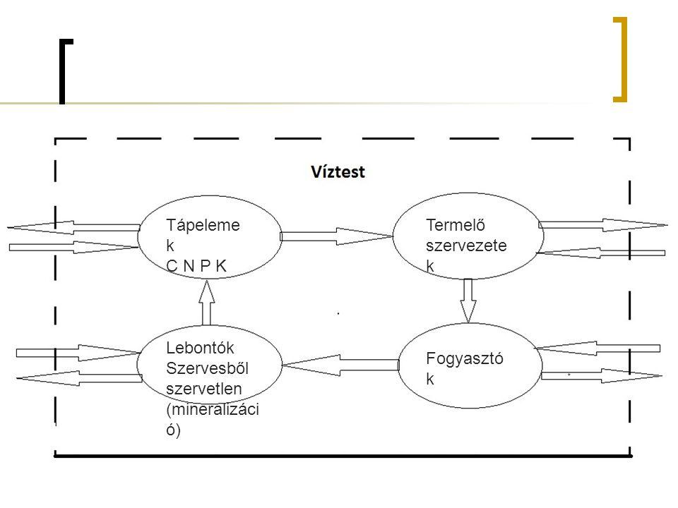 Vollen Veider modell Európai tavaknál tömegessé vált a mesterséges eutrofizáció EOCD országok kutatást indítanak a probléma megoldására A Q*P elfolyikL -P terhelés D