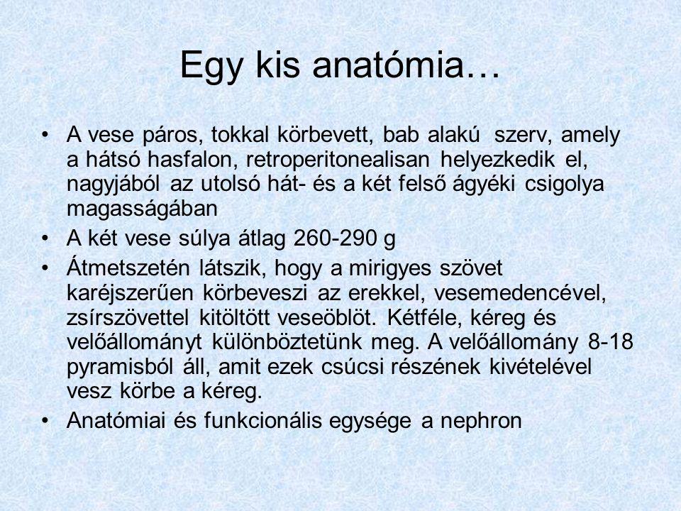 Glomerularis betegségek III Primer renalis haematuria-proteinuria sy: IgA nephropathia, recurraló haematuria, mérsékel proteinuria, glomerularis eltérések jellemzik, bármyel életkorban megjelenhet Chronikus nephritis-proteinuria sy: a glomerulusok diffuz sclerosisa jellemzi, proteinuria, cylindruria, általában hypertonia IgA nephropathia