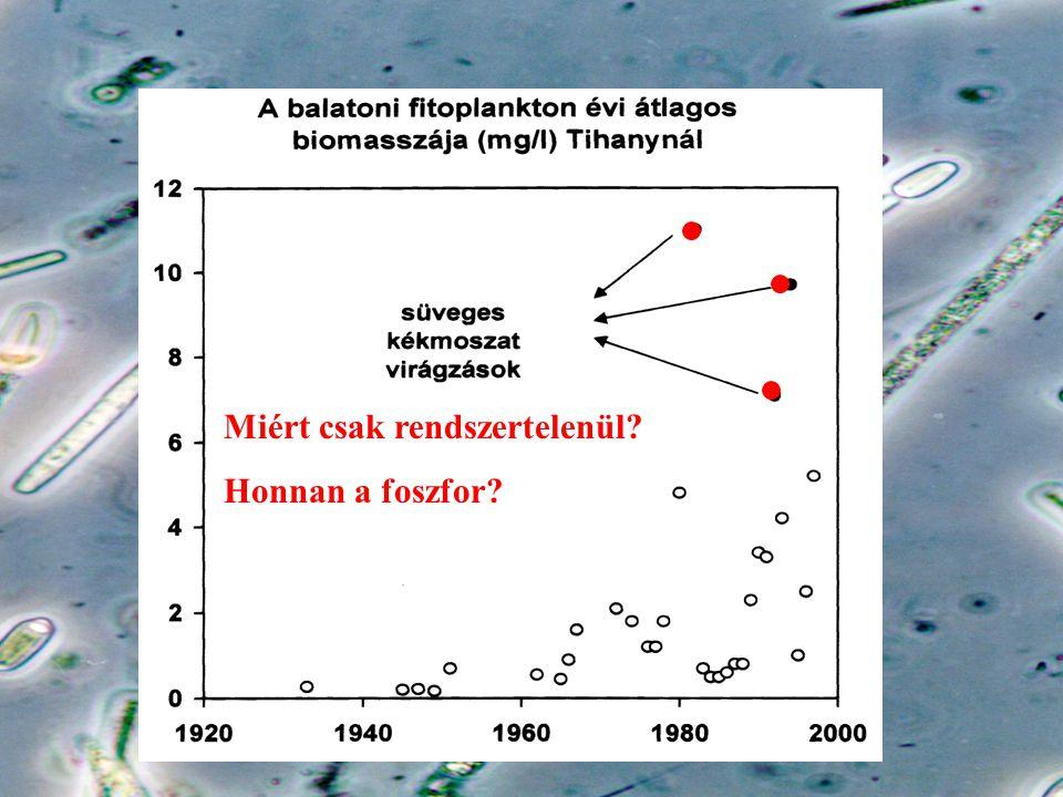Miért csak rendszertelenül? Honnan a foszfor?