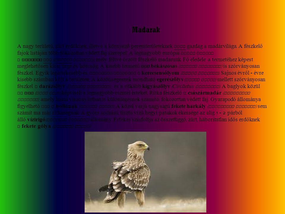Madarak A nagy területű, zárt erdőknek, illetve a környező peremterületeknek igen gazdag a madárvilága. A fészkelő fajok listáján több fokozottan véde