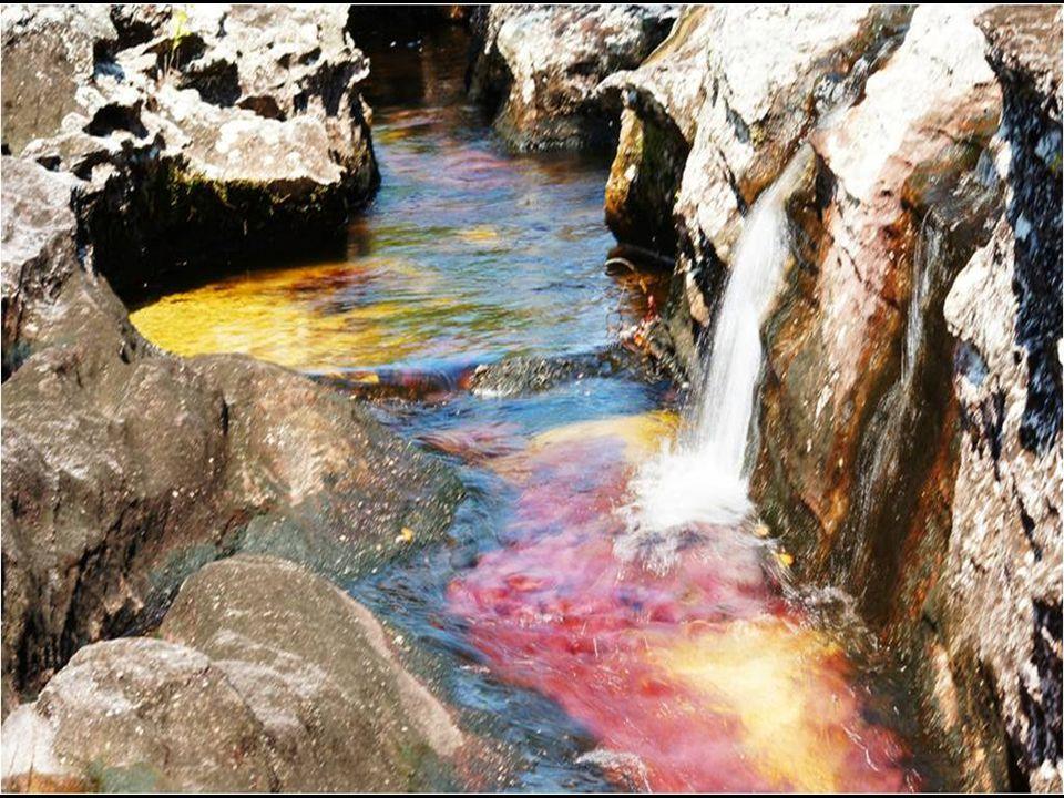 A Caño Cristales vagy ismertebben Folyékony Szivárvány egy folyó, amely a legszebb a világon , de úgy is ismert mint; A folyó, mely megszökött a paradicsomból .
