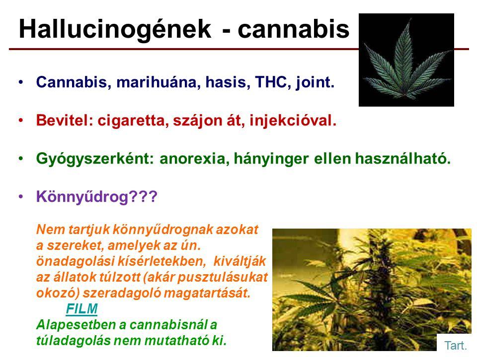 Hallucinogének - cannabis Cannabis, marihuána, hasis, THC, joint.