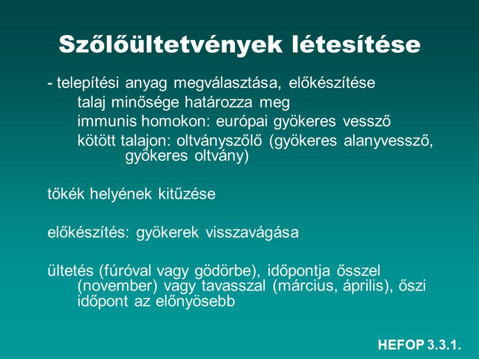 HEFOP 3.3.1. Szőlőültetvények létesítése - telepítési anyag megválasztása, előkészítése talaj minősége határozza meg immunis homokon: európai gyökeres