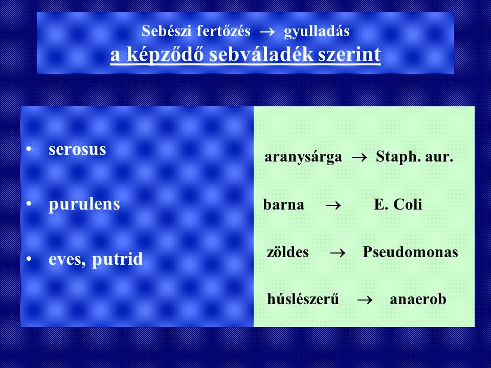Sebészi fertőzés  gyulladás a képződő sebváladék szerint serosus purulens eves, putrid aranysárga  Staph. aur. barna  E. Coli zöldes  Pseudomonas