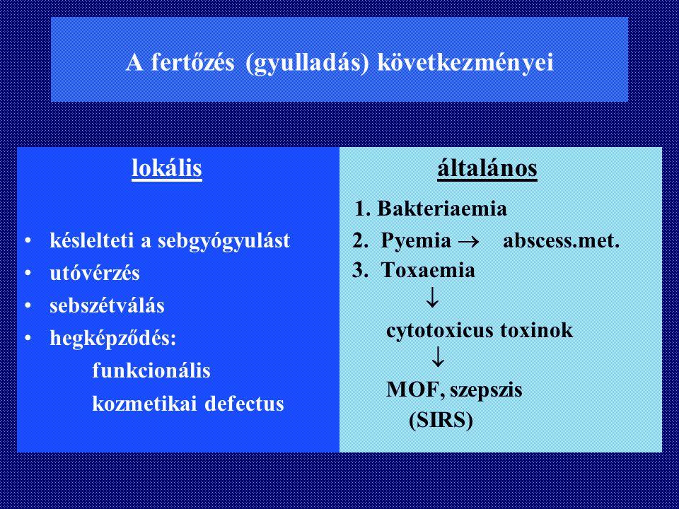 A fertőzés (gyulladás) következményei lokális késlelteti a sebgyógyulást utóvérzés sebszétválás hegképződés: funkcionális kozmetikai defectus általáno
