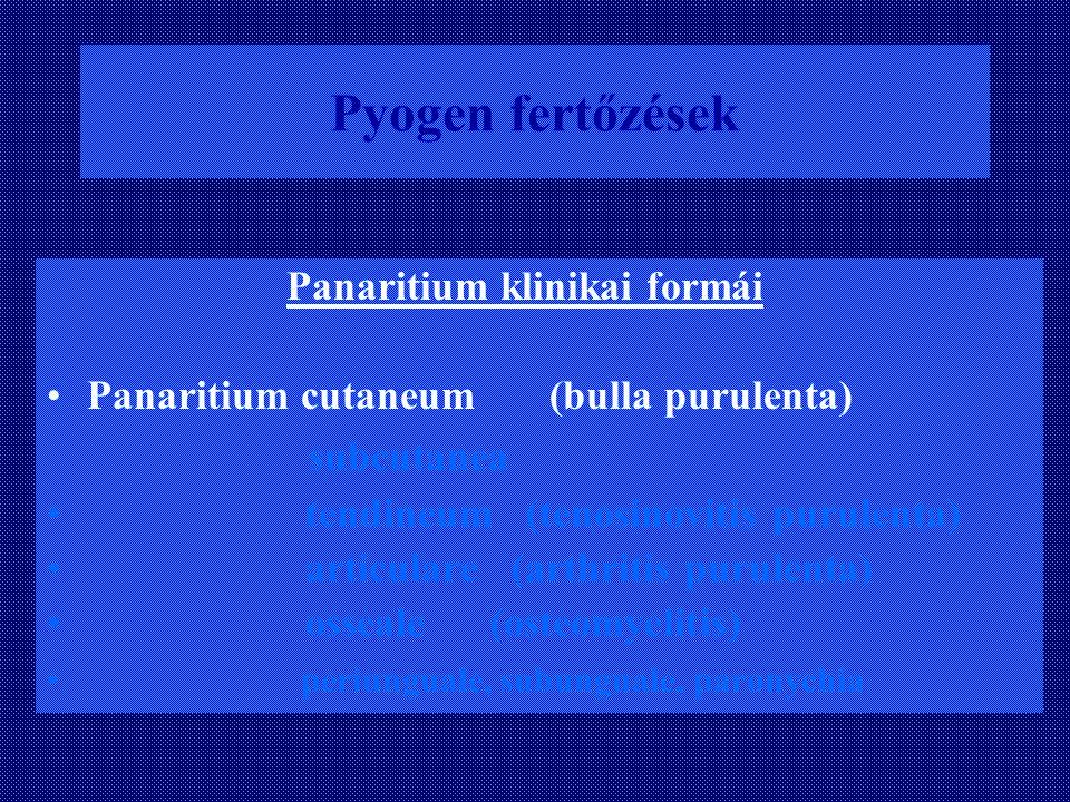 Pyogen fertőzések Panaritium klinikai formái Panaritium cutaneum (bulla purulenta) subcutanea tendineum (tenosinovitis purulenta) articulare (arthriti