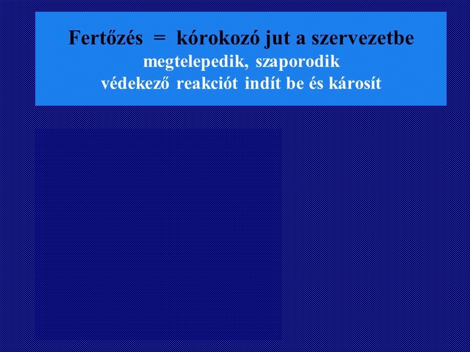 Gáz gangraena Kórokozók: Clostridium perfringens septicum sporogenes Pasteur, Welch, Nuttal Előfordulás: Halálozás: I.