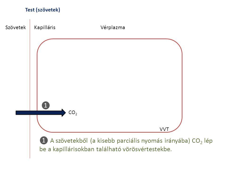 Test (szövetek) SzövetekKapilláris CO 2 Vérplazma VVT ❶ ❶ A szövetekből (a kisebb parciális nyomás irányába) CO 2 lép be a kapillárisokban található v