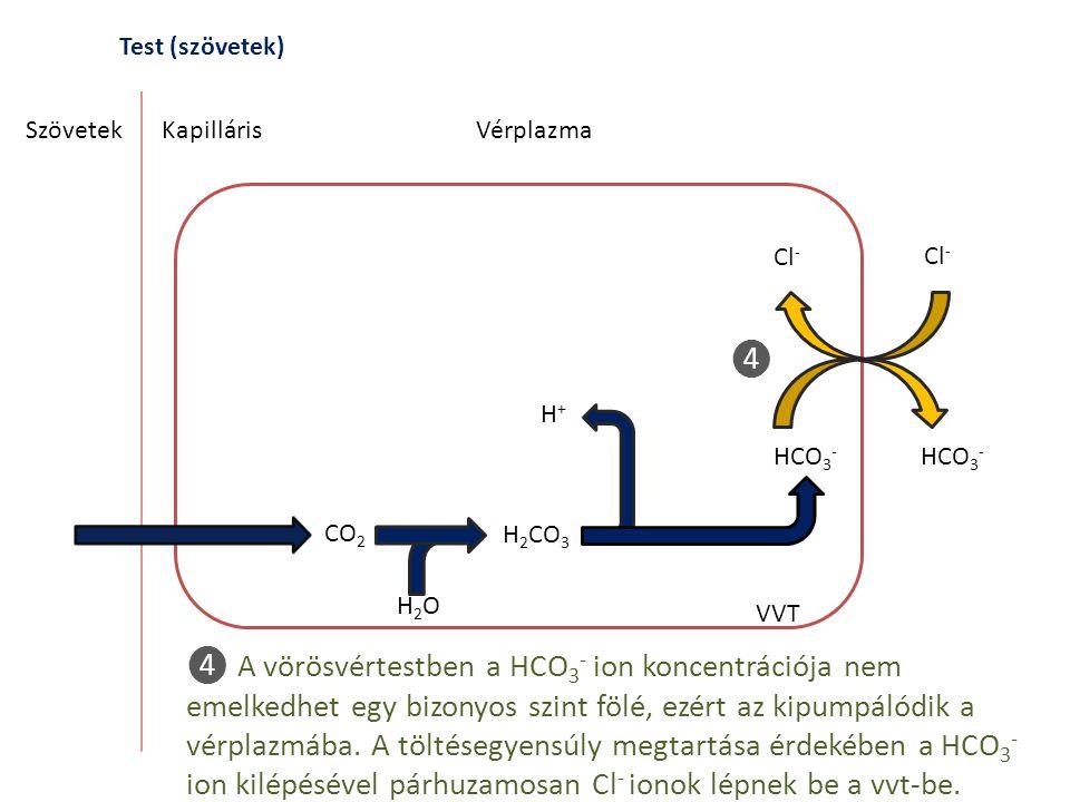 Test (szövetek) SzövetekKapilláris CO 2 H 2 CO 3 H2OH2O Vérplazma VVT ❹ A vörösvértestben a HCO 3 - ion koncentrációja nem emelkedhet egy bizonyos szi