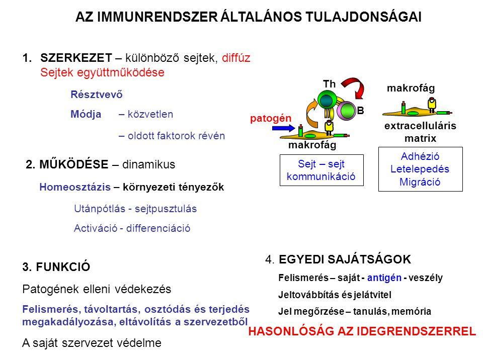 AZ IMMUNRENDSZER KETTŐS VÉDELMI VONALA VELESZÜLETETT/TERMÉSZETES IMMUNITÁS Előzetes aktiváció és felszaporodás nélkül véd a kórokozóktól Fagociták (monocita/makrofág, neutrofil, dendritikus sejt) Ölő sejtek (NK sejt,  δ T sejt) B1 limfociták (CD5+) Enzimek (lizozim,transferrin, laktoferrin, spermin, tripszin) Antibakteriális peptidek Komplement rendszer Citokinek, kemokinek SEJTEK OLDOTT ANYAGOK SZERZETT/ADAPTÍV IMMUNITÁS B-limfocita (B2) T-limfocita segítő T-sejt citotoxikus T-sejt szabályozó T-sejt Ellenanyagok KÖLCSÖNÖS EGYÜTTMŰKÖDÉS