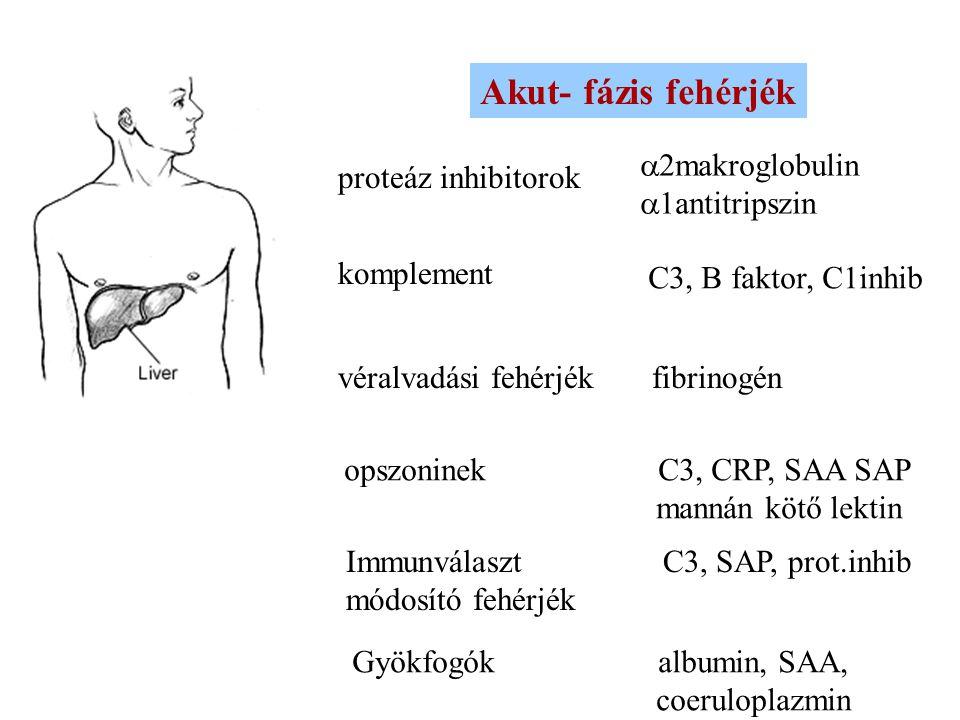 """A máj akutfázis reakciója (AFR) """"Tűzoltóság-2"""
