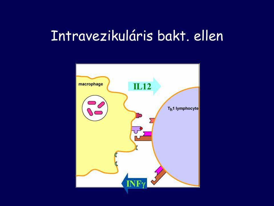 Szerzett –Th2  IL-4, IL-5 –plazma sejtek Antitestek Neutralizálás, opszonizáció, kompl. akt.