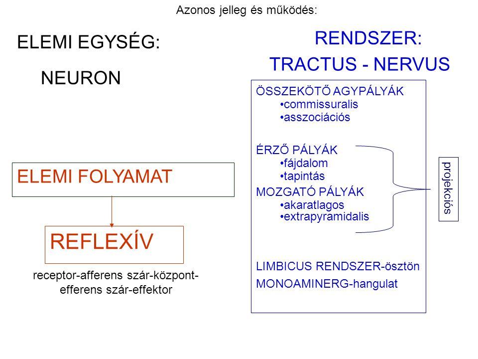 NEURON ELEMI FOLYAMAT RENDSZER: Azonos jelleg és működés: TRACTUS - NERVUS ÖSSZEKÖTŐ AGYPÁLYÁK commissuralis asszociációs ÉRZŐ PÁLYÁK fájdalom tapintá