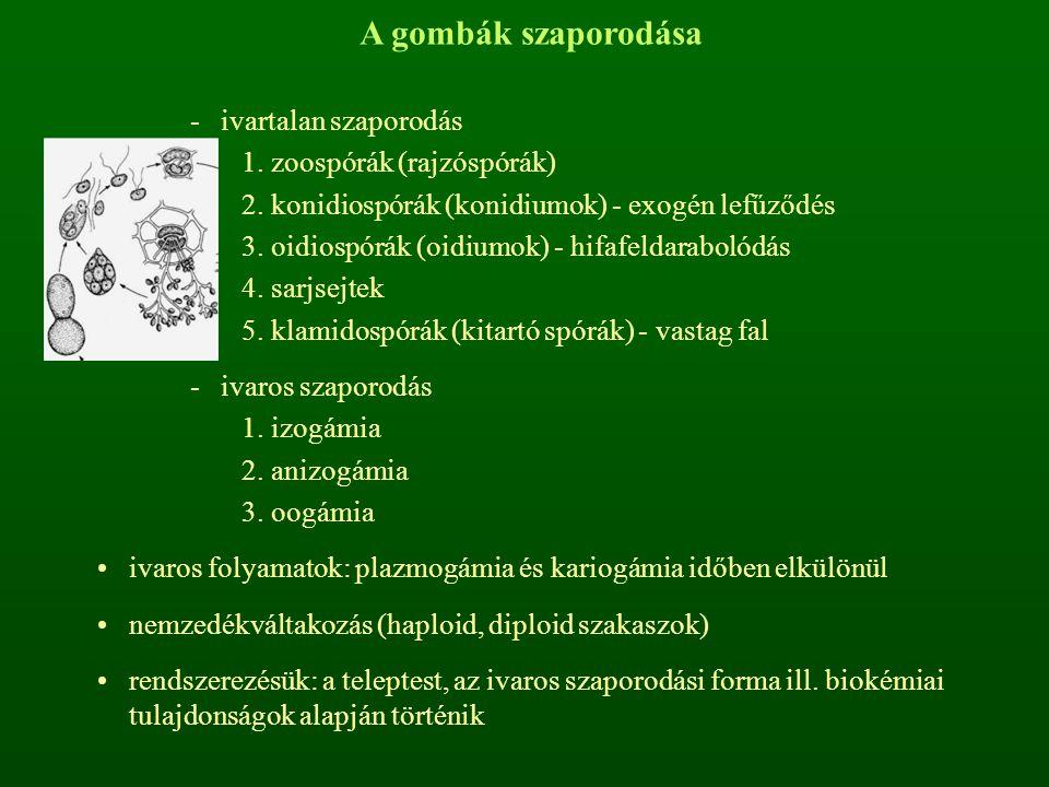 -ivartalan szaporodás 1.zoospórák (rajzóspórák) 2.konidiospórák (konidiumok) - exogén lefűződés 3.oidiospórák (oidiumok) - hifafeldarabolódás 4.sarjsejtek 5.klamidospórák (kitartó spórák) - vastag fal -ivaros szaporodás 1.izogámia 2.anizogámia 3.oogámia ivaros folyamatok: plazmogámia és kariogámia időben elkülönül nemzedékváltakozás (haploid, diploid szakaszok) rendszerezésük: a teleptest, az ivaros szaporodási forma ill.