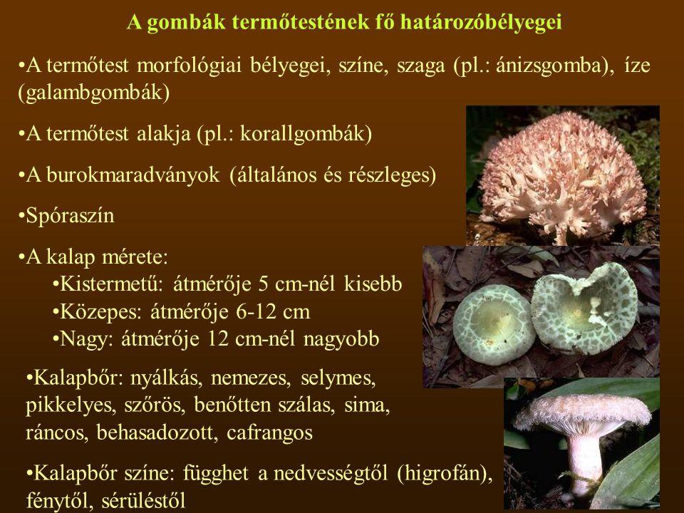 A gombák termőtestének fő határozóbélyegei A termőtest morfológiai bélyegei, színe, szaga (pl.: ánizsgomba), íze (galambgombák) A termőtest alakja (pl
