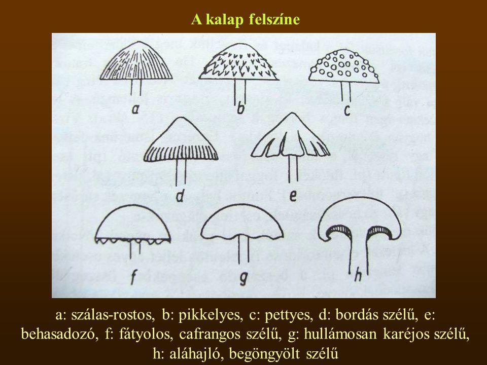 A kalap felszíne a: szálas-rostos, b: pikkelyes, c: pettyes, d: bordás szélű, e: behasadozó, f: fátyolos, cafrangos szélű, g: hullámosan karéjos szélű