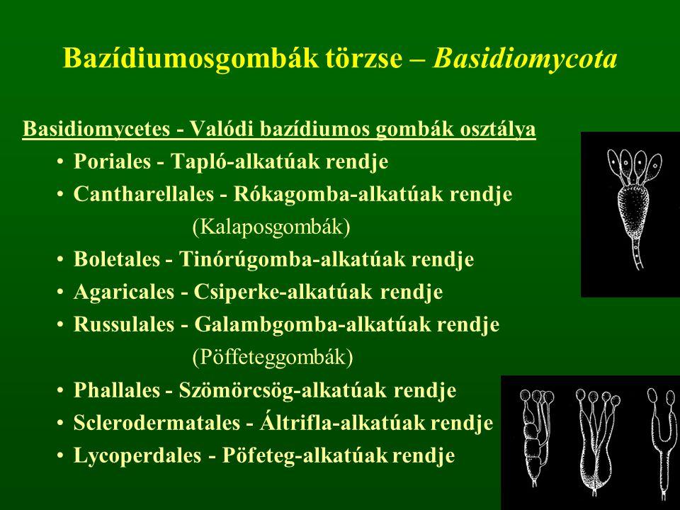 Bazídiumosgombák törzse – Basidiomycota Basidiomycetes - Valódi bazídiumos gombák osztálya Poriales - Tapló-alkatúak rendje Cantharellales - Rókagomba-alkatúak rendje (Kalaposgombák) Boletales - Tinórúgomba-alkatúak rendje Agaricales - Csiperke-alkatúak rendje Russulales - Galambgomba-alkatúak rendje (Pöffeteggombák) Phallales - Szömörcsög-alkatúak rendje Sclerodermatales - Áltrifla-alkatúak rendje Lycoperdales - Pöfeteg-alkatúak rendje