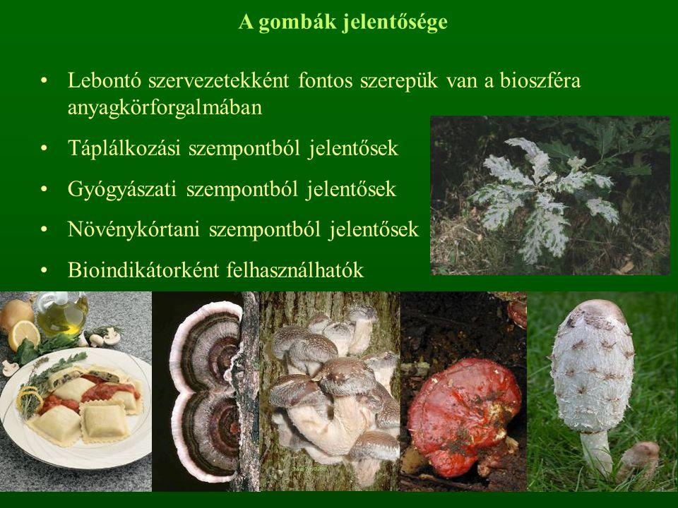 A gombák jelentősége Lebontó szervezetekként fontos szerepük van a bioszféra anyagkörforgalmában Táplálkozási szempontból jelentősek Gyógyászati szempontból jelentősek Növénykórtani szempontból jelentősek Bioindikátorként felhasználhatók