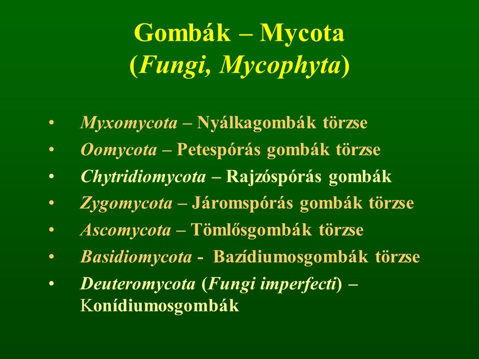 Gombák – Mycota (Fungi, Mycophyta) Myxomycota – Nyálkagombák törzse Oomycota – Petespórás gombák törzse Chytridiomycota – Rajzóspórás gombák Zygomycota – Járomspórás gombák törzse Ascomycota – Tömlősgombák törzse Basidiomycota - Bazídiumosgombák törzse Deuteromycota (Fungi imperfecti) – Konídiumosgombák