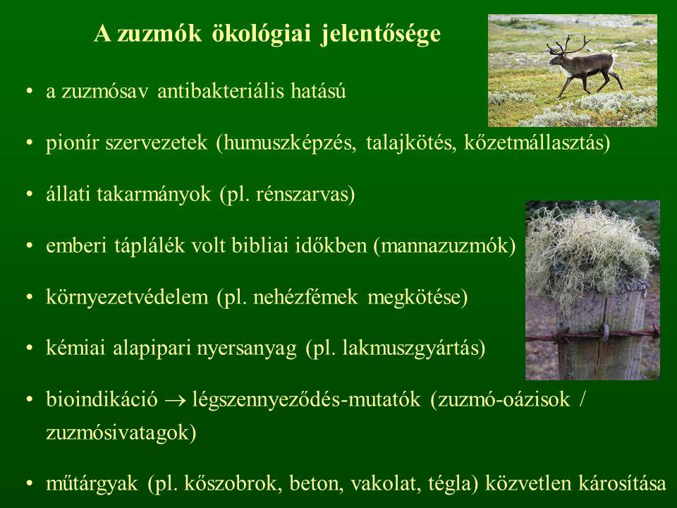 A zuzmók ökológiai jelentősége a zuzmósav antibakteriális hatású pionír szervezetek (humuszképzés, talajkötés, kőzetmállasztás) állati takarmányok (pl.