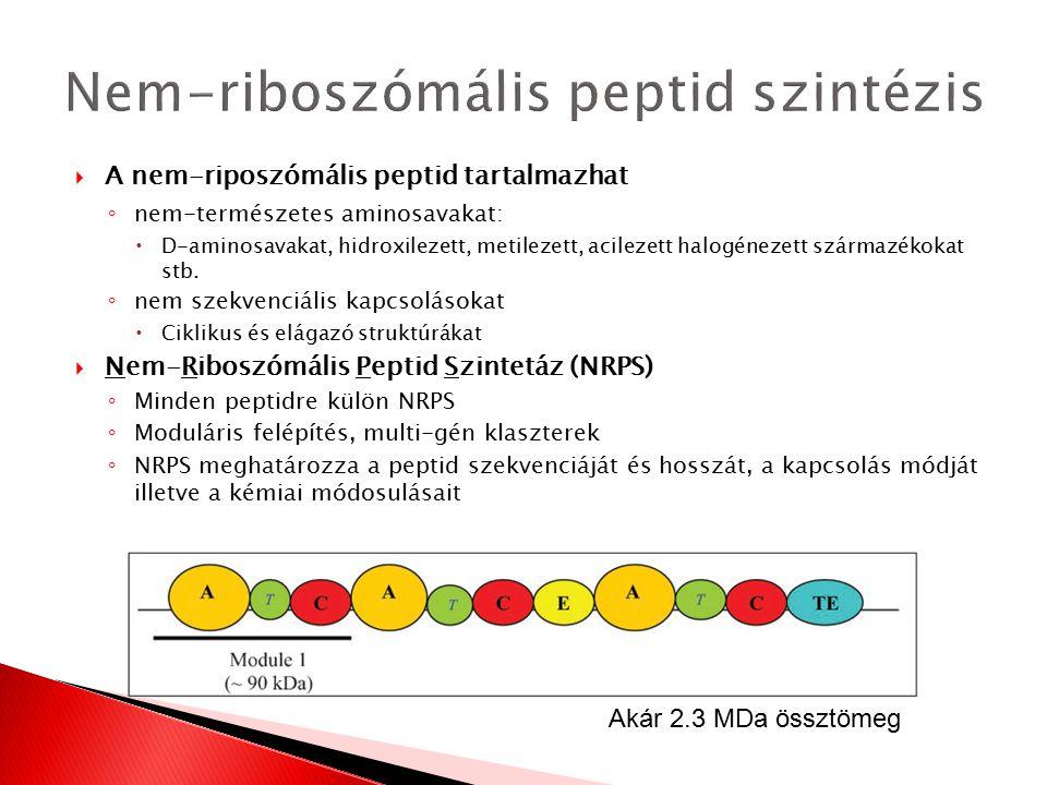  A nem-riposzómális peptid tartalmazhat ◦ nem-természetes aminosavakat:  D-aminosavakat, hidroxilezett, metilezett, acilezett halogénezett származék