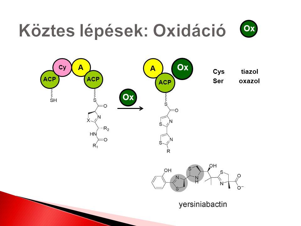 Ox A ACP Ox ACP Cy A ACP Cystiazol Seroxazol Ox