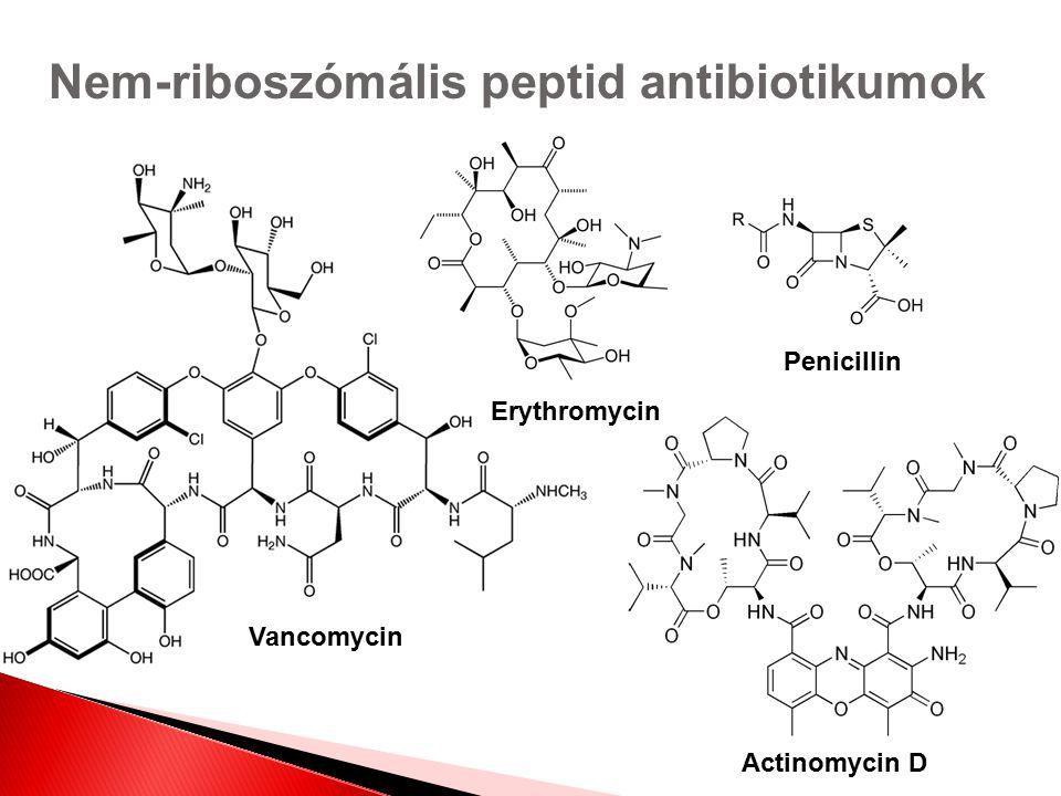 Nem-riboszómális peptid antibiotikumok Actinomycin D Vancomycin Penicillin Erythromycin